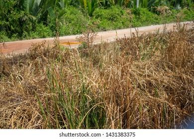 Backgrounds grass dry wayside field