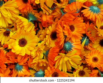 Backgrounds marigold flowers petals
