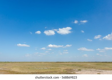 Backgrounds of savanna Grass in blue sky  beautiful landscape of safari and wild