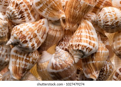Backgrounds and textures: collection of empty sea shells, natural exotic beach vacation abstract