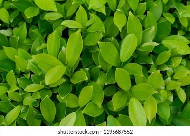 Backgrounds Textures Droplet on Green leaf