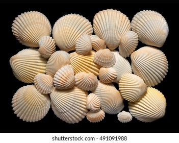 Backgrounds and textures: flat group of white and beige seashells, isolated on black background
