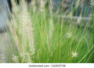 Backgrounds Textures Flowers roadside grass