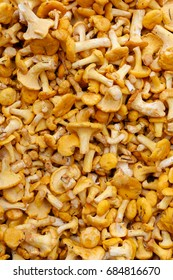 Backgrounds and textures: a lot of fresh raw girolles, yellow forest mushrooms