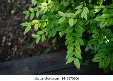 Backgrounds Textures Green leaf in garden