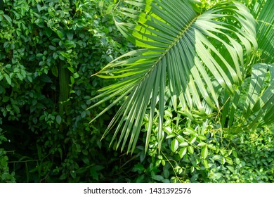Backgrounds Textures Green leaf In nature