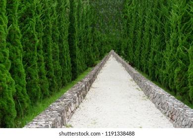 Backgrounds Textures walkway in the garden