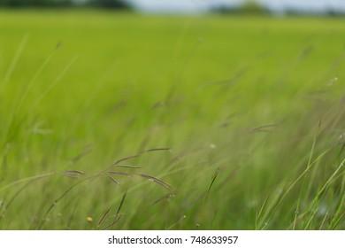 Backgrounds Wayside Flowers