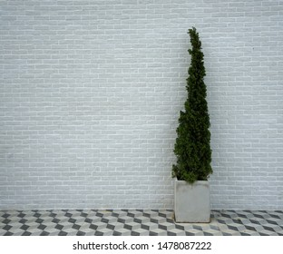 Backgrounds White walls and trees in pots