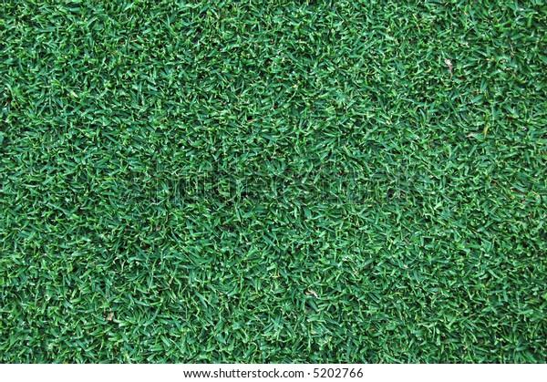 a background/texture of green grass