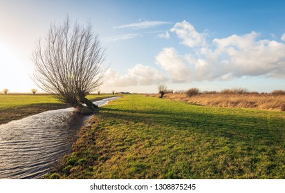 Backlight image of skew growing pollard willows in a Dutch polder landscape. The phot was taken in the Zonzeelse Polder near the village of Wagenberg, North Brabant.