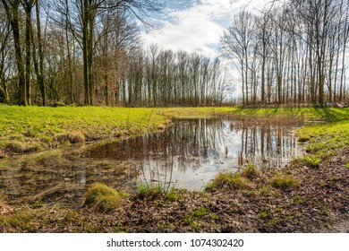 Backlight image of a small puddle in a Dutch nature reserve. The still largely bare trees are reflected in the mirror-smooth water surface. Spring has just started.