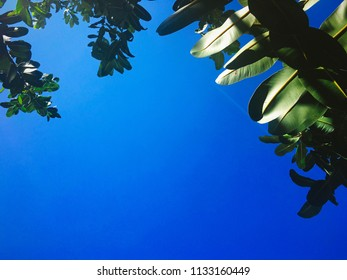 Backlight of leafs over the blue sky