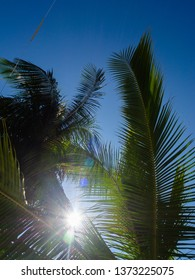 The backlight of the sun shining through tropical trees. Koh Phangan. Thailand.