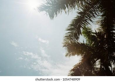 backlight tree took by film camera