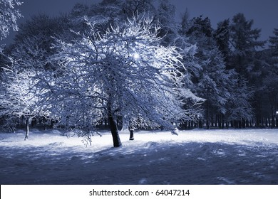 Backlighted tree covered with snow against dark trees and lantern. Park scene. Night shot.
