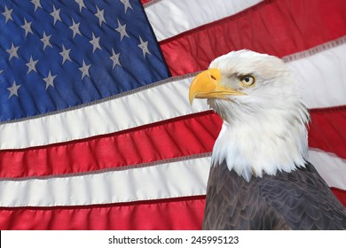 A Backlit American Flag and Bald Eagle in Foreground