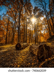 Backlit autumn foliage and trees with fallen logs in Kittatinny Valley State Park, Andover, New Jersey