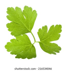 Backlit flat parsley leaf isolated