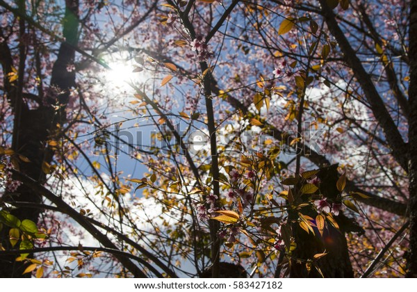 backlit in forest