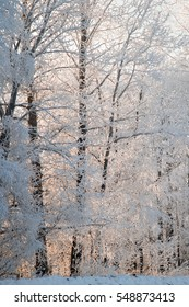 Backlit frozen trees