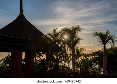 Backlit image of gardens, in the south of Tenerife, Canary Islands