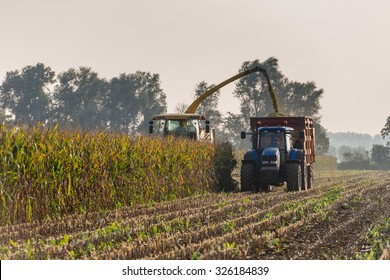 Backlit image of mechanical harvesting of organic cultivated fodder maize plants at the end of a sunny day in the beginning of the autumn season.