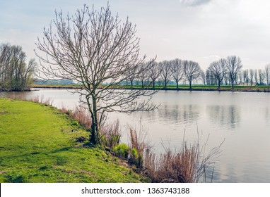 Backlit image of a tree with bare branches on the edge of a lake. The phot was taken near the village of Lage Zwaluwe, North Brabant, Netherlands.