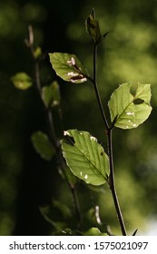 Backlit imperfect leaves at the edge of a Forest