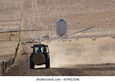 A backlit photograph of a tractor carrying a bale of hay and kicking up some dust on a dry but picturesque farm in Central Western NSW, Australia.