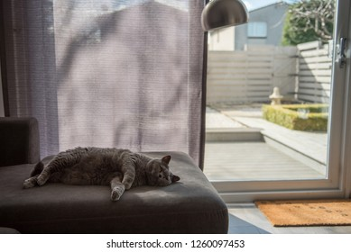Backlit picture of a cosy British Short Hair cat lying on a grey couch next to a patio door partially covered by a curtain and a zen garden with a stone pagoda in a house in Edinburgh City, Scotland.