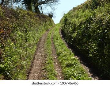 Backlit primrose path