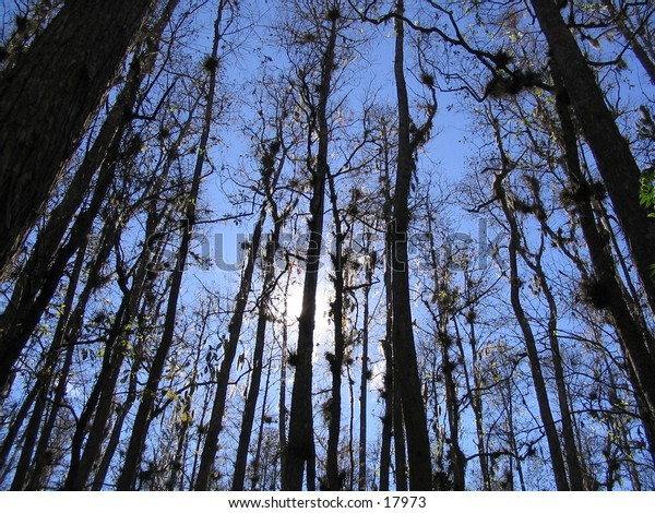 Backlit stand of trees