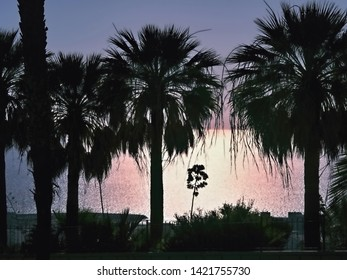 backlit, Sunset, in the foreground three palm trees in silhouette with a view of the glittering Atlantic Ocean, the sky is slightly blue to purple, on Tenerife in Adeje alto.