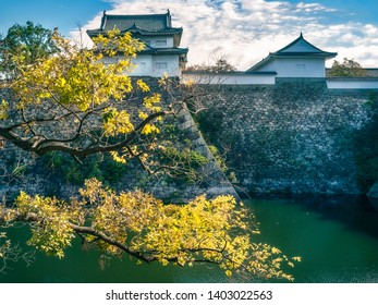 Backlit tree in the early morning sun at the West Outer Moat of Osaka Castle in Japan, with the Sengan-yagura Turret in the background.