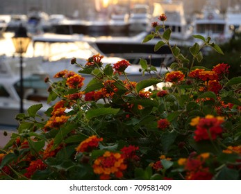 Backlit view of power and sailing boats docked at the sunset in Porto Rotondo, Italy