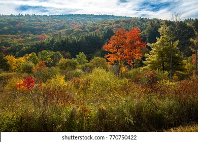 A backlit wetland with bushes and trees showing peak fall color near Stockbridge, Massachusetts.
