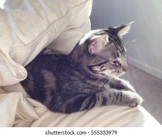 Backlit young tabby cat on a bed, half hidden under a down comforter, eyes closed