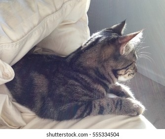 Backlit young tabby cat on a bed, half hidden under a down comforter, looking away from camera