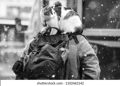 Backpack Cat - It's a BAD day! I'm going nowhere special, I feel uncomfortable AND it's snowing!