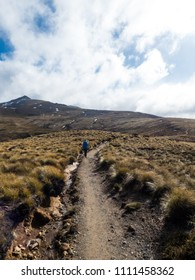 Backpacker tramping trough tussok in the mountains of New Zealand