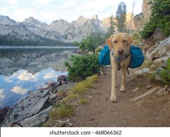 Backpacking dog, Idaho