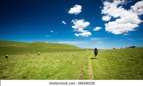 Backpacking through the Auvergne, France with a backpacker walking along a grassy farm trail through a field of grazing animals on a sunny summer day