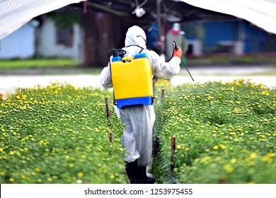 The backside of Farmer in Chemical protection suit sprayed fertilizer on the flower farms.