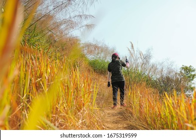 Backside of girl who wore army print t-shirt trekked in the  brown forest the way to Khao Chang Phuak Mountain