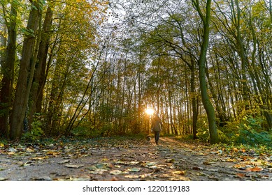 backview of a young slim woman who walks with her dog through an idyllic park with big trees with colorful autumn leaves, the late afternoon sun shines  through the trunks