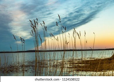 backwater landscape at the island of Usedom with reed grass at the baltic sea