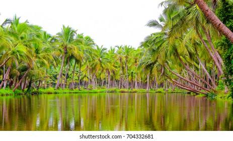 Backwater View near Payangadi in Kannur District in Kerala.