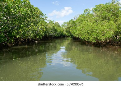 The backwaters at the coast of Mayotte island, France
