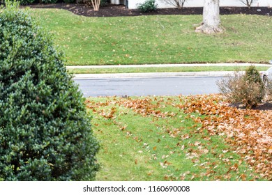 Backyard, back yard of residential neighborhood in Virginia with lawn, green grass, scattered dry yellow leaves, bushes, road, street, paved sidewalk, path